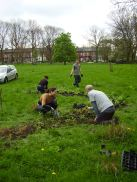 Planting plugs next to the green path , Spring 2014