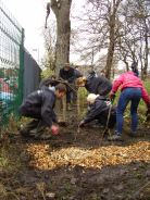 Planting the hedge 2012