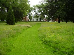 Grass Path in spring